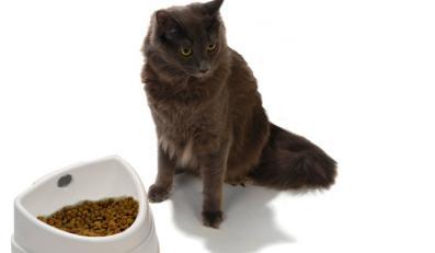 Miska przemówi do kota głosem właściciela