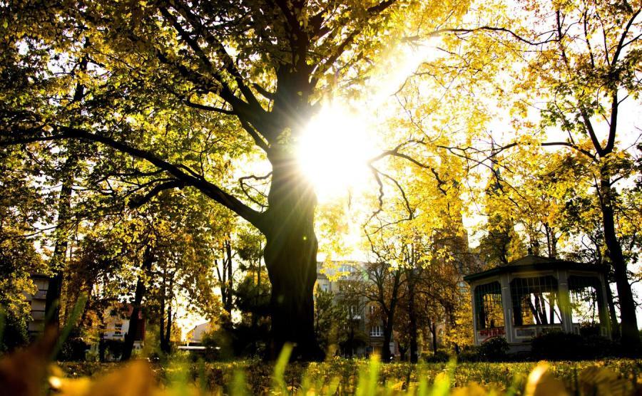 Jesień, zdjęcie ilustracyjne.