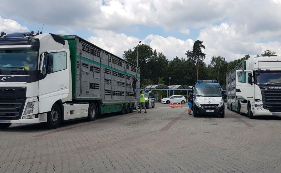 Martwe zwierzęta - niehumanitarny transport zatrzymany przez ITD