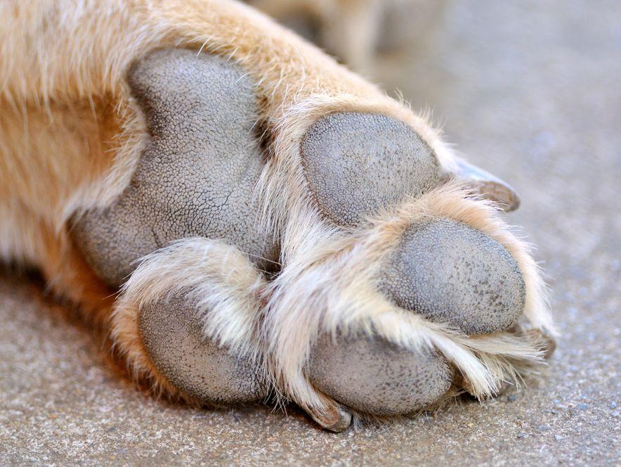 Psy mogą wcześnie wykrywać raka jelita grubego