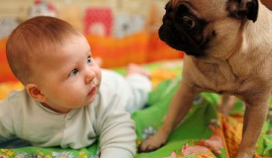 Dziecko zafascynowane psem.