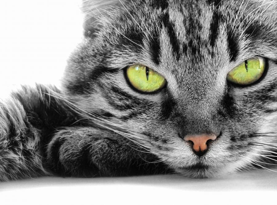 Śpisz sama, nie z kotem