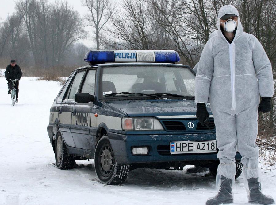 Z ptasią grypą w Polsce walczyła policja. Radiowóz wraz z przebranym w ochronny uniform policjantem blokują drogę w okolicach Kostrzyna nad Odrą. W okolicy znaleziono martwego łabędzia, zainfekowanego wirusem H5N1