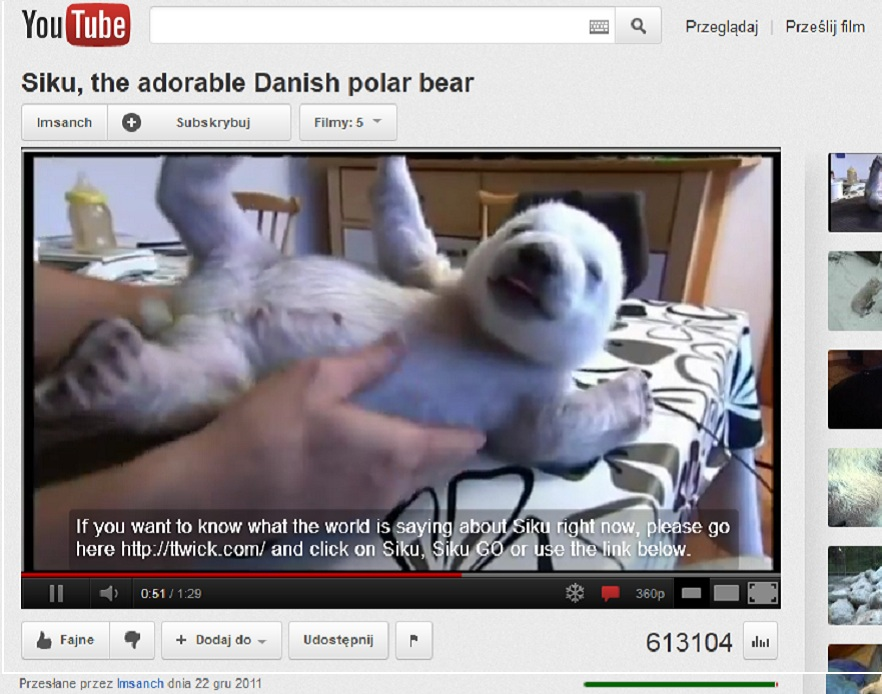 Niedźwiadek Siku, miś polarny z Danii