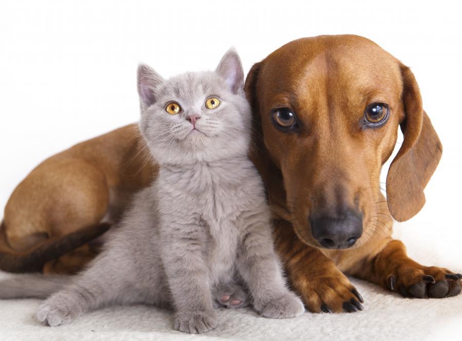 Kot Kontra Pies Który Silniej Uczula Alergie Objawy I Leczenie