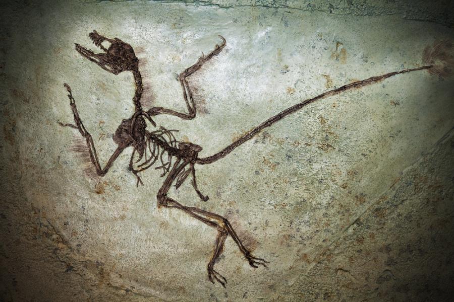 Kości dinozaura