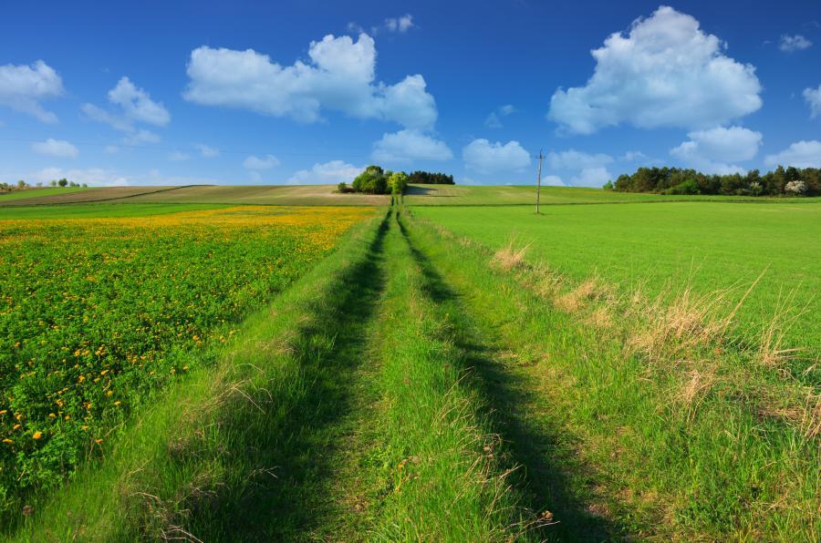 Droga przez pole