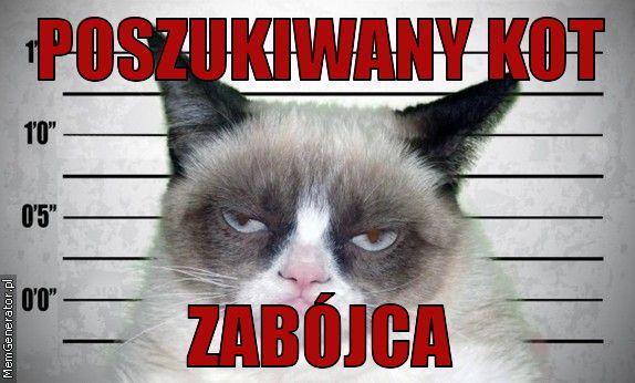 W światowy Dzień Kota Koty Zawładnęły Internetem Memy Zdjęcie