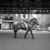 "Zdjęcie autorstwa Vivian Maier – ""Chłopak na koniu"" (1954)"