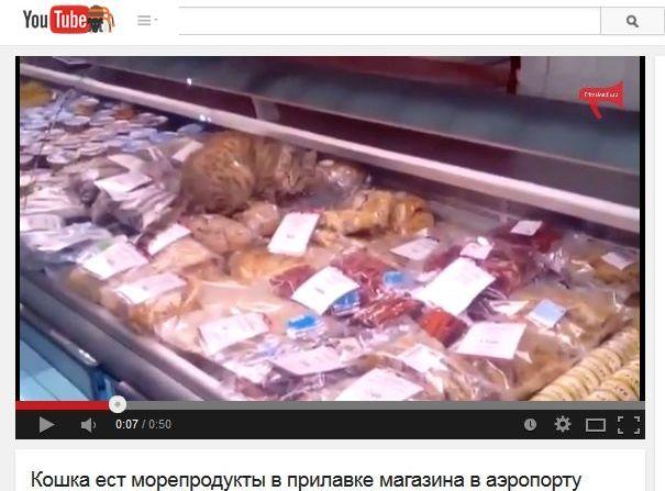 kot wyjada towar w sklepie