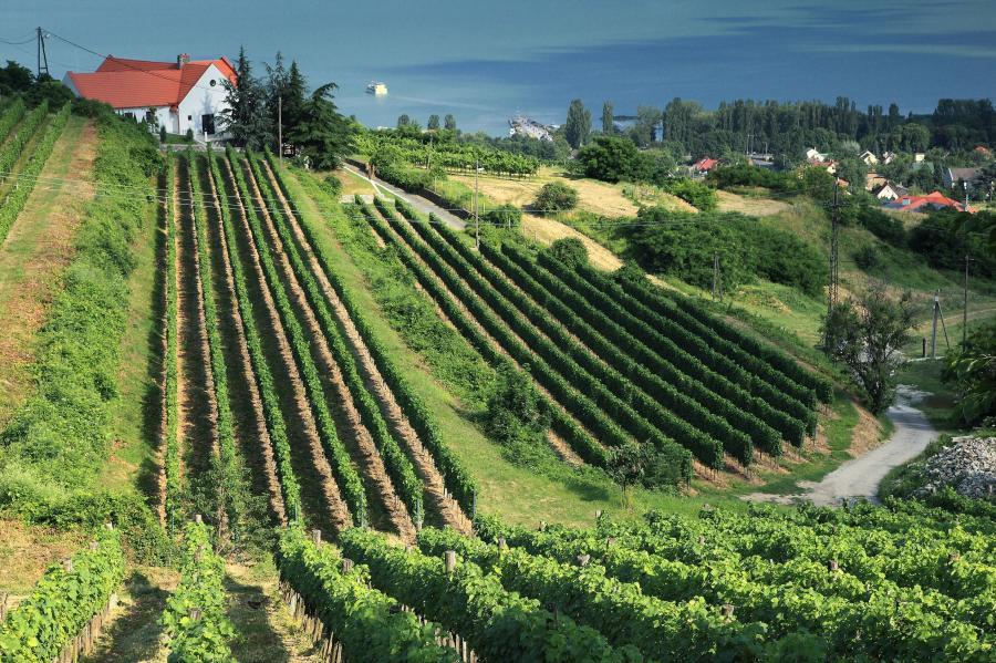 Winnica w Badascony, Węgry
