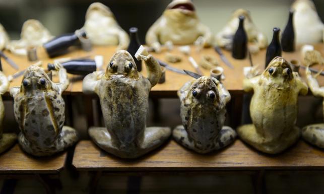 Bankiet wypchanych żab, wyścigi psów. NIEZWYKŁE ZDJĘCIA zwierząt z minionego roku