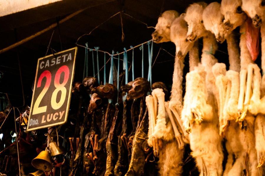 Płody lam na rynku w Cochabamba, Boliwia; fot. T. Bogusz / Pirania na kolację