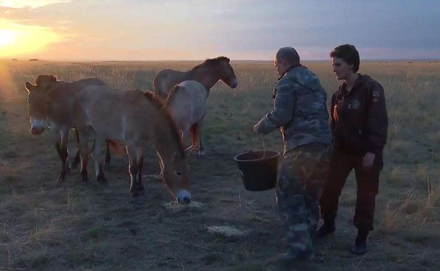 Władimir Putin i konie Przewalskiego